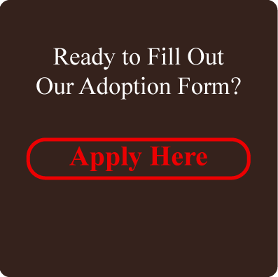 Fill Out Adoption Form